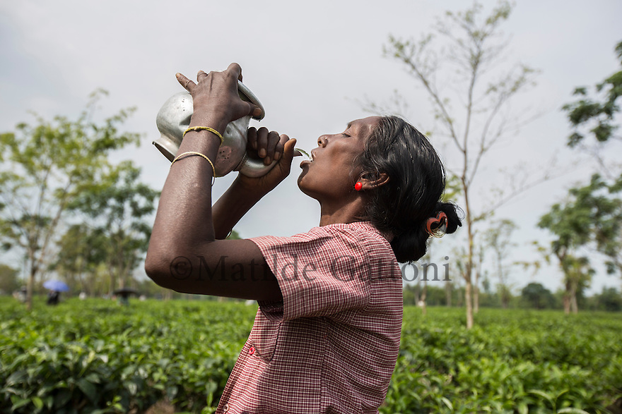 India – West Bengal: A tea plucker drinking during a work pause at Mogulkata Tea Estate, in the Dooars region. Safe drinking water, which should be provided by the companies, is one of the most common problems in the tea estates. As a result of its poor quality, fever, diarrhoea and abdominal pains are widespread among the workers.