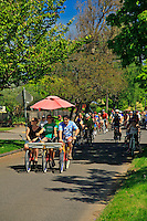 Riding bikes on Ainsworth Street during Sunday Parkways in Portland Oregon