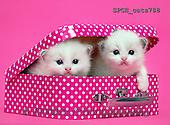 Xavier, ANIMALS, REALISTISCHE TIERE, ANIMALES REALISTICOS, cats, photos+++++,SPCHCATS788,#a#