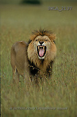 Carl, ANIMALS, wildlife, photos(SWLA2137,#A#)