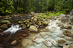 River joined by water from hot spring causing white sulphur deposits, Tawau Hills Park, Sabah, Borneo, Malaysia