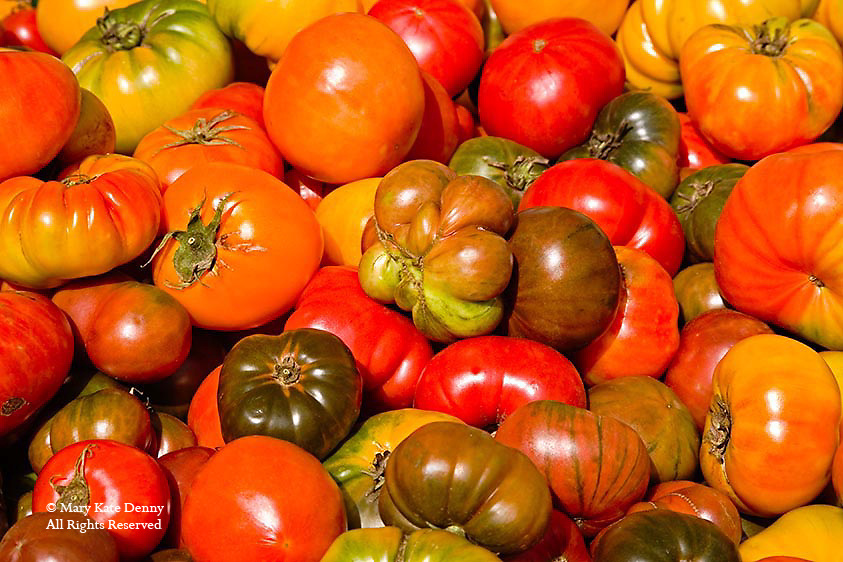 Red,yellow,green,orange colors and varieties of tomatoes grouped together