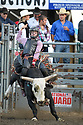 20 Aug 2014: Derek Kolbaba riding the bull Snake scored a 64 during the first round of the Seminole Hard Rock Extreme Bulls competition at the Kitsap County Stampede in Bremerton, Washington.