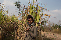"Cambodia - Kampong Speu Province - Louv Veoun, 39, standing in the sugarcane plantation where she works daily. ""I don't want money, I want my old land back. It is the land of my ancestors"". Louv Veoun, 39 and mother of 8, was living in a small cottage on her rice field in Kork until March 2010, when she was dispossesed of her two hectares of land and compensated with 25 USD. She was forced to abandon her house and settle in a piece of land belonging to some of her relatives, close to the plantation. Today, she lives in utter poverty together with her family."
