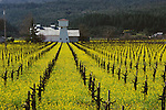 Rossi Vineyard near Saint Helena