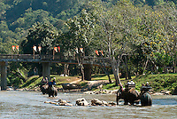 "The elephant in Thailand is a complicated story. For centuries they have been revered and domesticated as a beast of burden. They are a national symbol and cultural icon. But for many, tourist camps and jungle rides are controversial. A century ago there were over 100,000 Asian elephants in Siam (Thailand). Today there are less than 5,000, of which half live in captivity. When logging was banned in 1989, hundreds of elephants were ""unemployed"" and found work in the tourism industry. Travelers from around the world come to ride these giants through the forest and cheer as they perform anthropomorphic tricks. The issue becomes the use of corporal punishment to tame and train the next generation of an endangered animal."