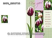 Alfredo, FLOWERS, BLUMEN, FLORES,  photos+++++,BRTOXX02735,#F#