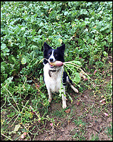 BNPS.co.uk (01202 558833)