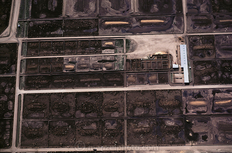 Aerial photograph of a beef cattle feedlot using potato waste from a  French fry factory supplying McDonald's using Simplot potatoes, Idaho..
