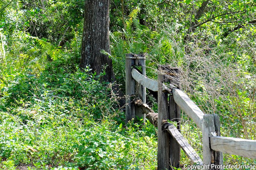 Cypress Trail fence photographed at Arthur Marshall Loxahatchee Preserve, Boynton Beach, Florida.