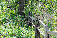 Cypress Trail fence photographed at Arthur Marshall Loxahatchee Preserve, Boynton Beach, Florida.