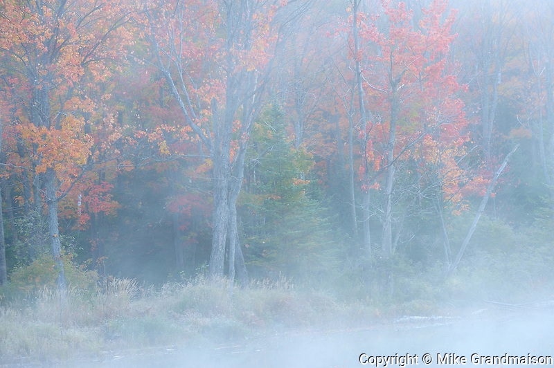 forest in autumn foliage and fog at Silent Lake<br /> Silent Lake Provincial Park<br /> Ontario<br /> Canada