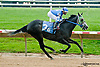 Stormin Wendy winning at Delaware Park racetrack on 6/10/14