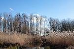 Europa, DEU, Deutschland, Nordrhein Westfalen, NRW, Rheinland, Niederrhein, Moenchengladbach, Typische Landschaft, Freianlage bei Schloss Rheydt, Schilf, Kategorien und Themen, Natur, Umwelt, Landschaft, Landschaftsfotos, Landschaftsfotografie, Landschaftsfoto, <br /> <br /> [Fuer die Nutzung gelten die jeweils gueltigen Allgemeinen Liefer-und Geschaeftsbedingungen. Nutzung nur gegen Verwendungsmeldung und Nachweis. Download der AGB unter http://www.image-box.com oder werden auf Anfrage zugesendet. Freigabe ist vorher erforderlich. Jede Nutzung des Fotos ist honorarpflichtig gemaess derzeit gueltiger MFM Liste - Kontakt, Uwe Schmid-Fotografie, Duisburg, Tel. (+49).2065.677997, archiv@image-box.com, www.image-box.com]