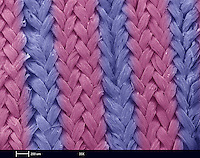 A scanning electron microscope (SEM) image of fastskin swimsuit fabric.  This fabric simulates the water flow found on the skin of sharks.  Using natural materials for insperation has lead to these modern fabrics.  This fabric allows swimmers to decrease fluid resistance and had lead swimmers to record times..This image is  2 mm wide and was imaged at 35x magnification.