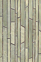 Name: Bamboo<br />