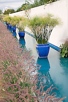 Cobalt blue pots planted with Giant Papyrus line up in a shallow pool bounded by a white wall and drifts of Feather Grass ( Pennisetum) create a dramatic architectural statement at the Denver Botanic Garden in Denver, Colorado