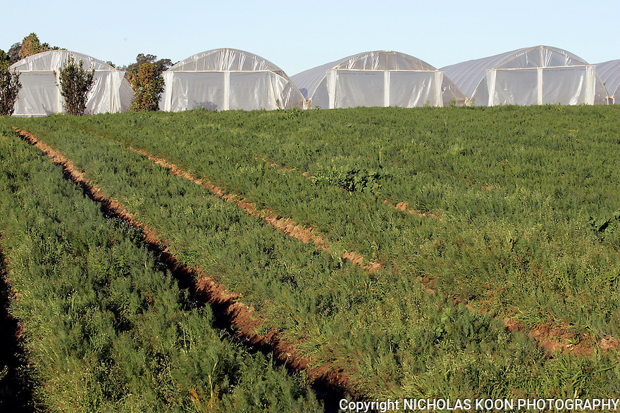 Herb Thyme Farms, California.