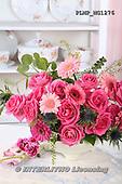 Marek, FLOWERS, BLUMEN, FLORES, photos+++++,PLMPMG1276,#f# roses