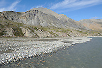 A herd of caribou travels along a gravel bar in the Hulahula River Canyon on a summer day in Alaska's Arctic National Wildlife Refuge.