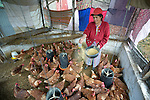Gloria Ventura feeds chickens in a women's cooperative poultry raising project in Buena Vista Bacchuc, a small Mam-speaking Maya village in Comitancillo, Guatemala. The project is assisted by the Maya Mam Association for Investigation and Development (AMMID).