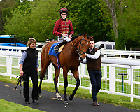 Winner of The Lascar Ruby Anniversary Handicap, Scorching ridden by Joshua Bryan and trained by Andrew Balding  enter the winners enclosure during Afternoon Racing at Salisbury Racecourse on 18th May 2017