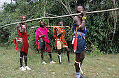 Lolgorian, Kenya. Siria Maasai; four moran warriors bringing timber for building the magic house for Eunoto coming of age ceremony.