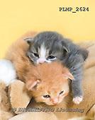 Marek, ANIMALS, REALISTISCHE TIERE, ANIMALES REALISTICOS, cats, photos+++++,PLMP2624,#a#