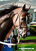 Saintly Love before The Nick Shuk Memorial Stakes at Delaware Park on 8/29/2013