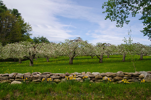 Hansel's orchard, view from the road spring, USA