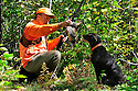 00515-074.09 Ruffed Grouse hunter takes bird from dog pudelpointer on edge of heavy early season cover.  Hunt, aspen, retrieve.