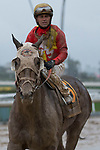 ARCADIA, CA  MARCH 10: A very muddy #6 Fear the Cowboy, ridden by Javier Castellano, after the Santa Anita Handicap (Grade l) on March 10, 2018, at Santa Anita Park in Arcadia, CA. (Photo by Casey Phillips/ Eclipse Sportswire/ Getty Images)