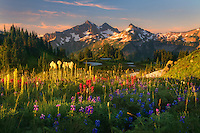 Beautiful soft light on wildflower laden meadows looking towards the Tatoosh Range, Mt. Rainier National Park.<br />