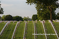65095-01804 Flags on Memorial Day at Jefferson Barracks National Cemetery, St Louis, MO