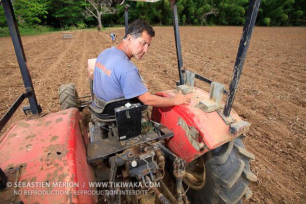 Récolte de pommes de terre à Bourail