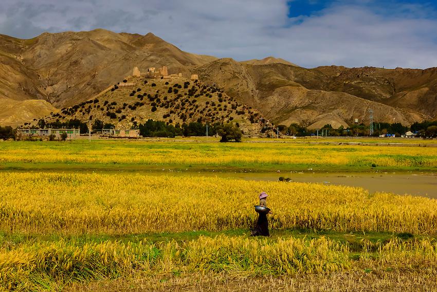 Between Gyangze and Shigatse, Tibet (Xizang), China.