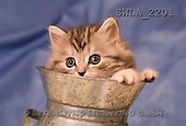 Carl, ANIMALS, photos(SWLA2201,#A#) Katzen, gatos
