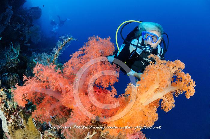 Dendronephthya sp.,Korallenriff, Weichkorallen und Taucher, Soft coral reef and scuba diver, Bali Barat Nationalpark, Insel Menjangan, Indonesien, Asien, Island Menjangan, Indopazifik, Indonesia, Indo-Pacific Ocean, Asia