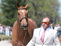 LEXINGTON, KY - April 26, 2017. #37 Copper Beach and Bruce Buck Davidson Jr. from the USA at the Rolex Three Day Event First Horse Inspection at the Kentucky Horse Park.  Lexington, Kentucky. (Photo by Candice Chavez/Eclipse Sportswire/Getty Images)