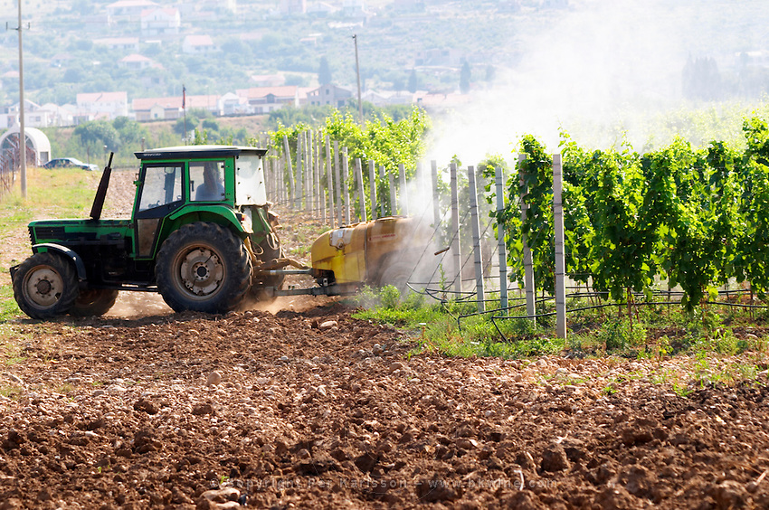 A vineyard tractor spraying with treatment for diseases between the rows of vines. Vines equipped with black rubber or plastic tubes for artificial irrigation watering. Vineyard on the plain near Mostar city. Hercegovina Vino, Mostar. Federation Bosne i Hercegovine. Bosnia Herzegovina, Europe.