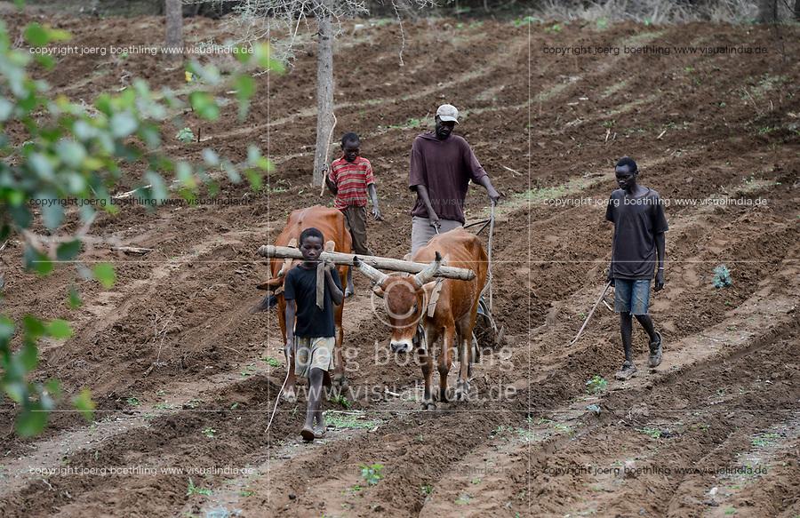 ZAMBIA, Sinazongwe, Tonga tribe, farming with ox / Kleinbauern bestellen ihre Felder mit Ochsen