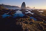 Olympic National Park, Shi Shi Beach, Point of the Arches, Olympic Coast National Marine Sanctuary, Washington State, Pacific Northwest, rocky shore, sea stacks, sunset,  Pacific Ocean, Northwest coast, Olympic Peninsula, North America, USA,.