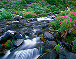 Mount Rainier National Park, WA <br /> Pink monkey-flower, groundsel, and valerian blooming along the flowing waters of the Paradise River