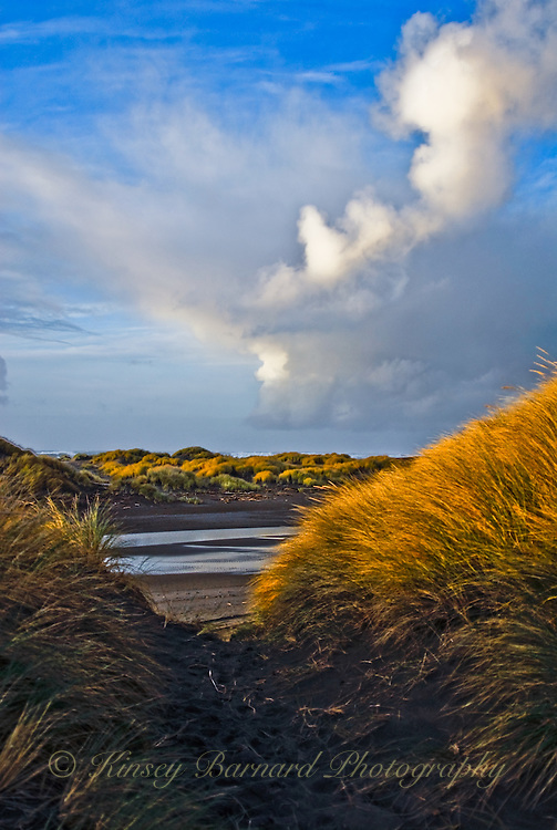 The dunes at Gold Beach, Oregon