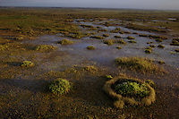 A restored prairie of native plants in Lake Okeechobee in the Everglades also known as the River of Grass. <br /> <br /> Forests of dead Melaleuca trees stand were cleared and native plants return to wetland prairies in the Everglades. The invasive tree took over 500,000 acres of South Florida wetlands before restoration began on near Lake Okeechobee. South Florida Water Conservation and the Everglades National Park are embarked on the largest wetlands restoration attempted--and the most expensive. <br /> Melaleuca, of Australian origin, forms a dense monoculture choking out all other plant life.