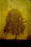 A tree standing on a textured yellow background