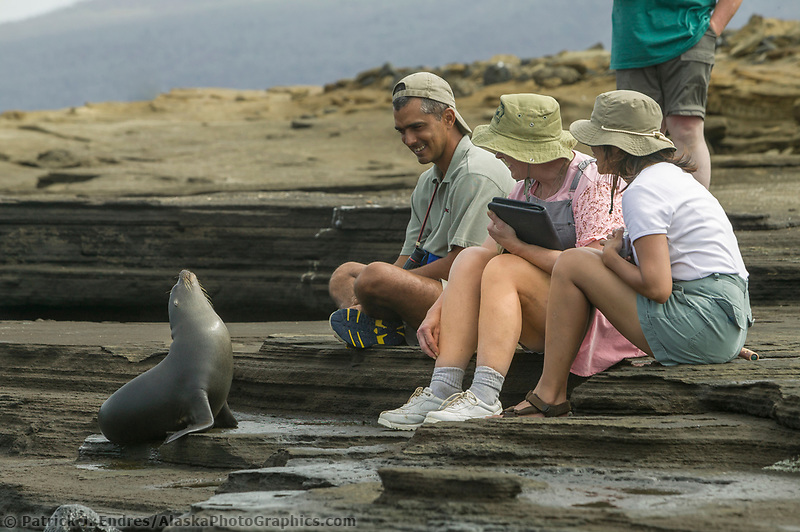 Espanola Island, Galapagos Fur Seal, Galapagos Islands, Ecuador