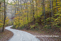 63895-14412 Road in fall at LaRue-Pine Hills in Shawnee National Forest, IL