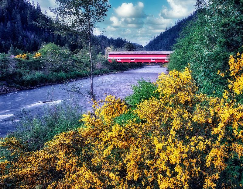 Office Bridge with scotch broom in bloom. Westfir, Oregon.