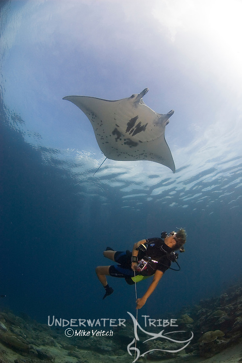 A diver watches a Manta Ray, Manta birostris, Mi'il Channel, Yap, Micronesia, Pacific Ocean (MR)